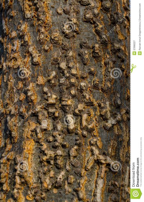 skin the color of bark bark texture royalty free stock photography image 37996227