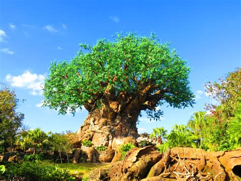 wdwthemeparks the tree of wdwthemeparks the tree of