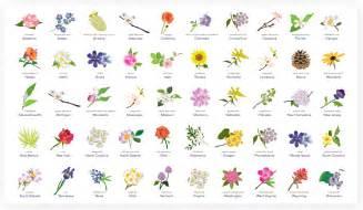 flowering america a breakdown of state flowers esurance blog