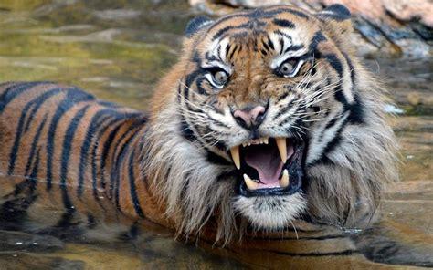 Japaner Zoologischer Garten by Environment Tier