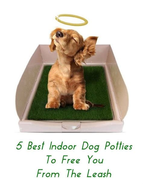 dog potties in house best 25 indoor dog potty ideas on pinterest potty
