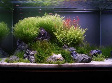 aquascaping ada ada 60p tank with seiryu seki stones aquascape