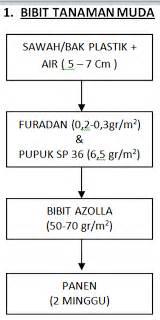 Furadan 5gr metode cara budidaya azolla microphylla sebagai sumber