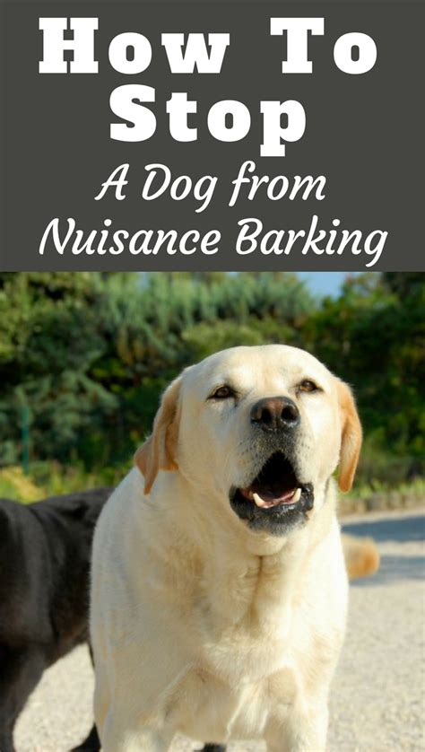 how to get dog to stop barking how to stop a dog from barking labrador training hq