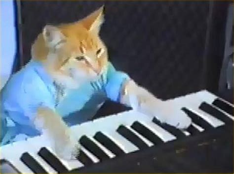 keyboard cat tutorial keyboard cat videos