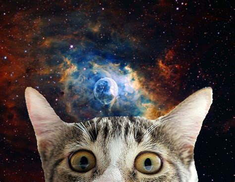 space cat wallpaper tumblr omg cats in space