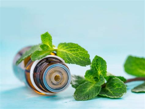 Mind Menthol essential oils that an energy worker can t live without