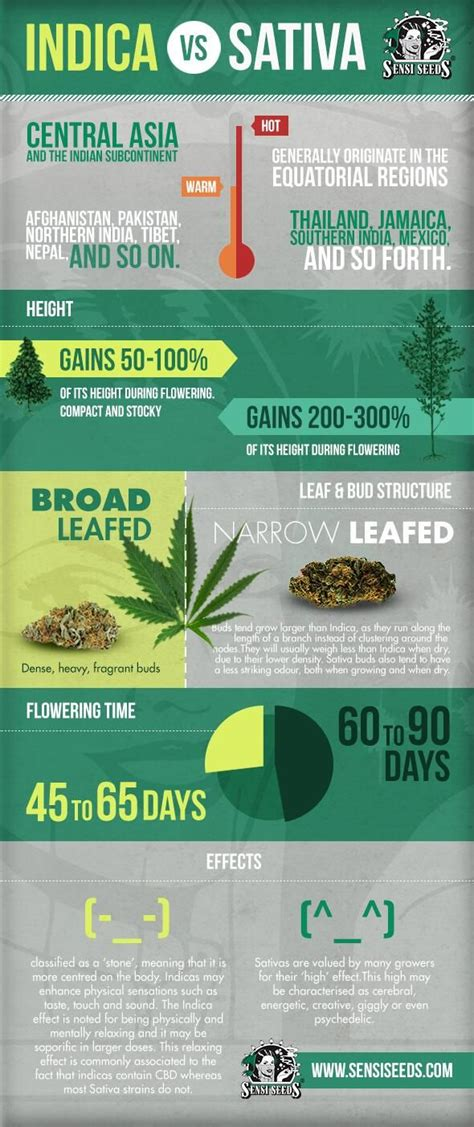 Can Essential Oils Help Detox Thc by 39 Best Cannabis Rosin Packaging Inspiration Images On