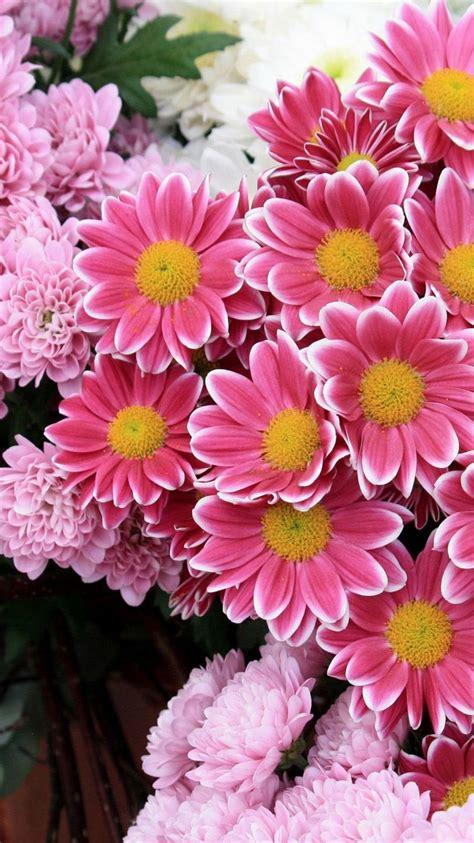fresh pink flowers iphone  wallpaper wallpapers