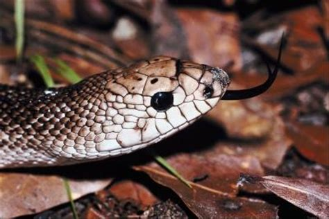 how to get rid of snakes in basement snakes in southern louisiana ehow