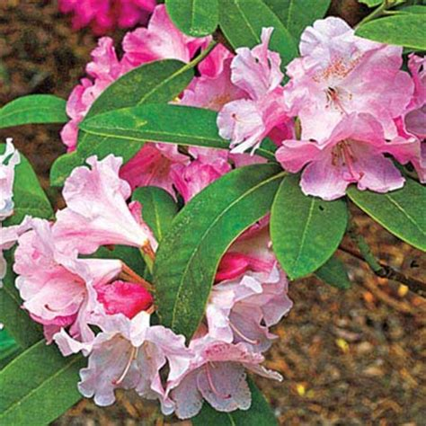 best plants for curb appeal imperial services best foundation plants for stellar curb