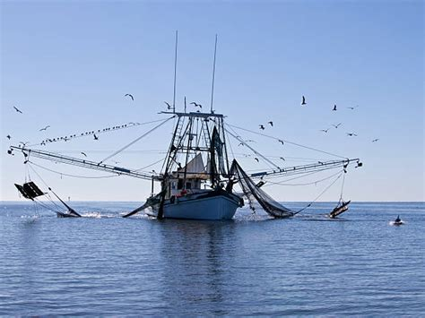 shrimp boat pics royalty free shrimp boat pictures images and stock photos