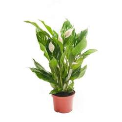 home plants house plants ebay