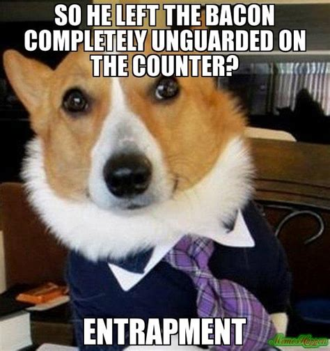 Law Dog Meme - just cant get enough of the lawyer dog meme 12 pics