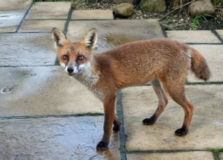 the fox tail bungalow company close to nature in a welsh holiday cottage quality