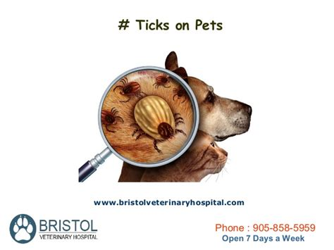 how to attack your how to prevent your pet from parasitic attack