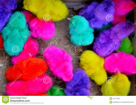 colorful chickens chickens colorful stock photo image 44111964