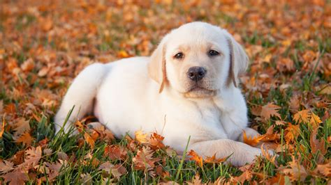 puppy fell on puppies enjoy fall southern living