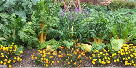 Garden Companion Planting by Two And A Farm Companion Planting