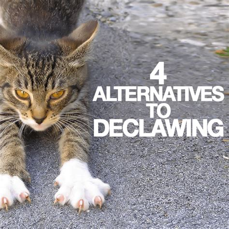 cat declawing alternatives related keywords cat declawing alternatives long tail keywords