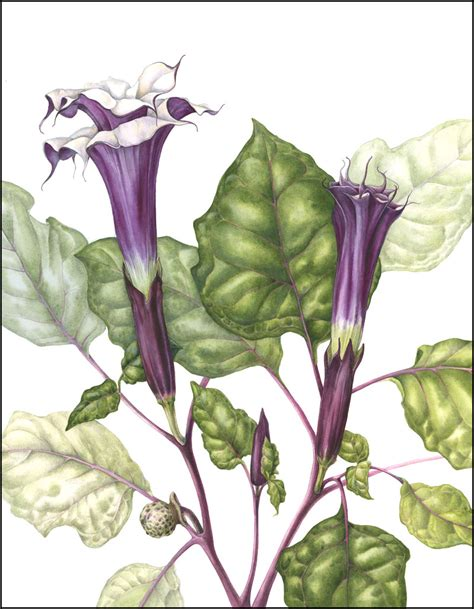 libro botanical painting in gouache mr purple the art of mindy lighthipe