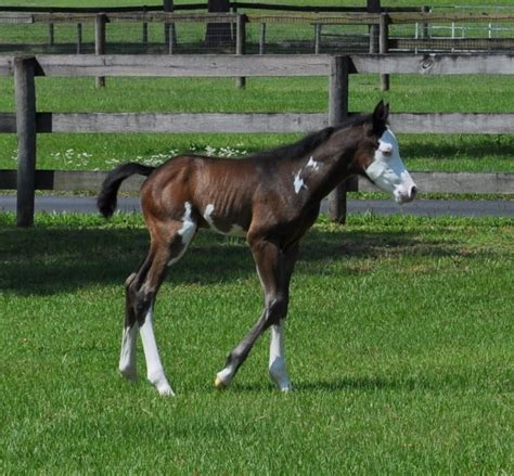 a for all time for sale foals