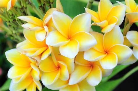 kumpulan gambar bunga beserta informasinya selingkarancom