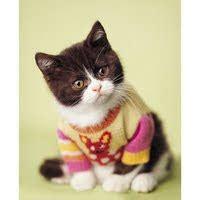 come allevare un gatto amico gatto come si esamina un gatto