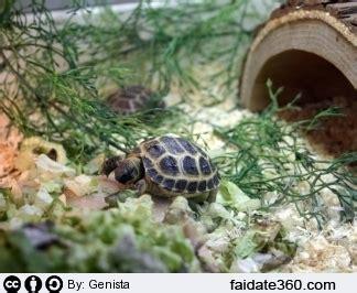 tartarughe da casa casa moderna roma italy costruire un terrario
