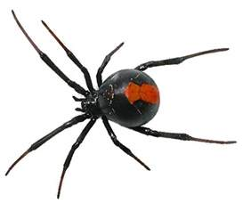 F Spider Spider Png By Camelfobia On Deviantart