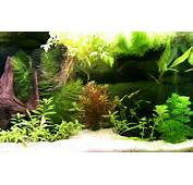 Fish Tank Backgrounds Download  PixelsTalkNet
