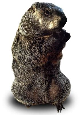 groundhog day deeper meaning groundhog day deeper meaning 28 images quotes from the