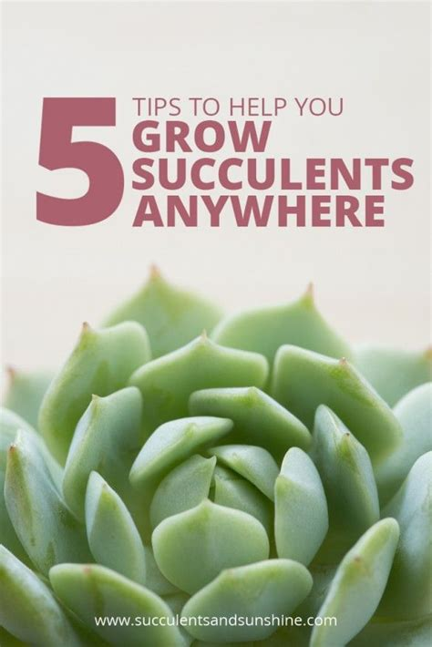 4 plants you can grow today to keep mosquitoes away the 645 best beautiful succulents cactus images on