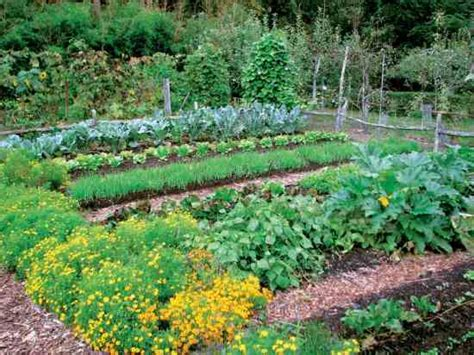 top tips for great fall gardens organic gardening