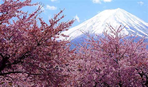 imagenes de flores de 400 x 150 top 10 spring festivals in 2014 earth traveling