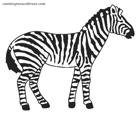imagenes de cebras para dibujar faciles dibujos para colorear cebras