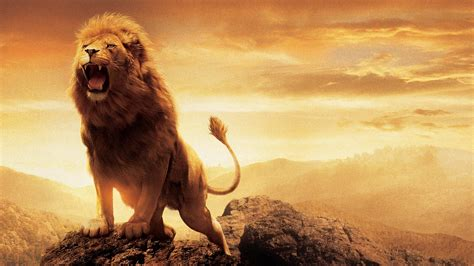 wallpaper hd of lion narnia lion aslan wallpapers hd wallpapers id 15038