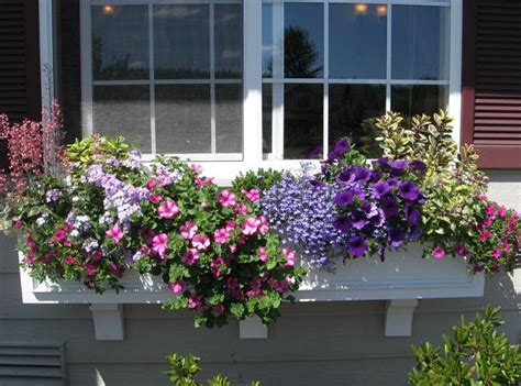 Best Window For Plants Best Plants For Window Boxes