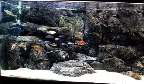 membuat background aquascape membuat background 3d akuarium tips dan trik kreatif