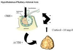 Cortisol Detoxing by Congenital Adrenal Hyperplasia Cah Is A Family Of