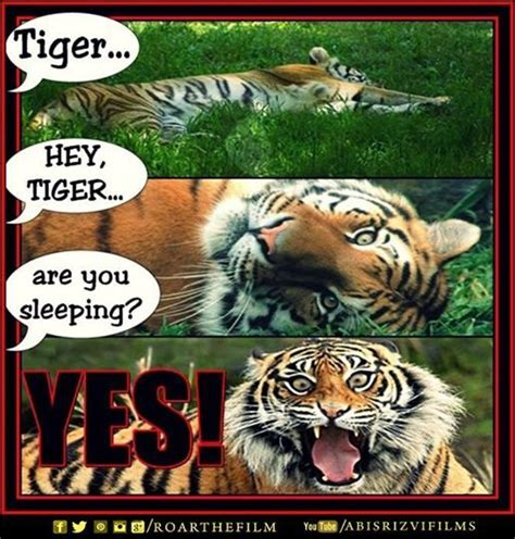 Funny Tiger Memes - 28 best images about roar memes on pinterest to be