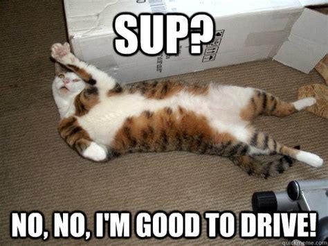Drunk Cat Meme - drunk cat memes quickmeme
