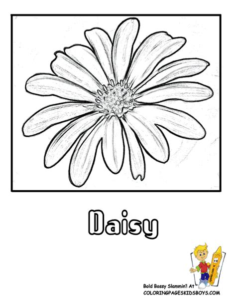 printable daisies flowers coloring flower page top ten popular flowers free