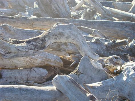 driftwood ls coastal lighting driftwood beach art prints coastal morning light nature