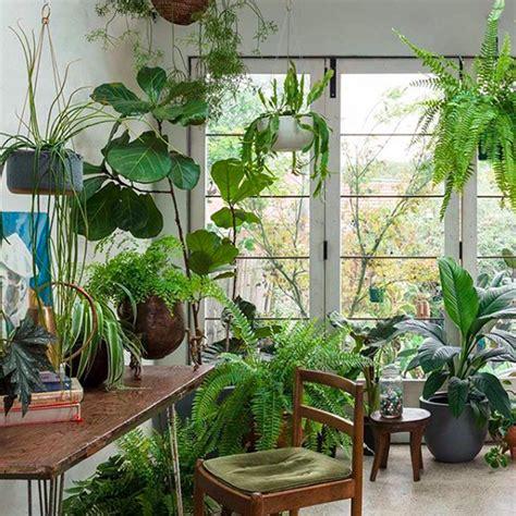 articles  app helps  choose indoor plants