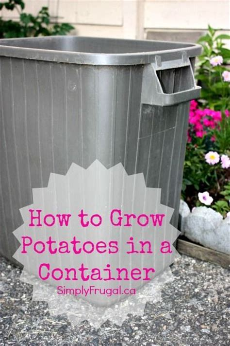 container potato gardening how to grow potatoes in a container