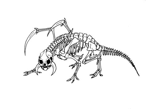 animal skeleton coloring pages  getcoloringscom