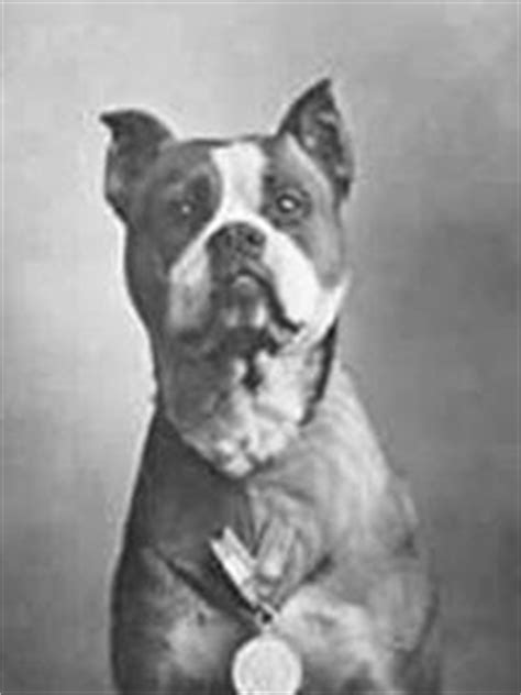 Sergeant Stubby Pictures Pit Bulls As Mascots And War Dogs For The American