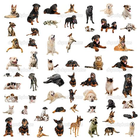 dogs types list of names of small dogs breeds breeds picture