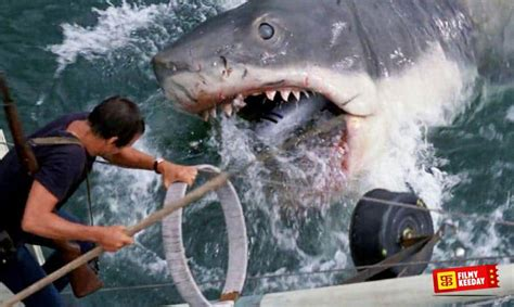 best shark attack 10 best shark attack that will stop you diving into